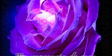 Pon esta rosa en tu muro