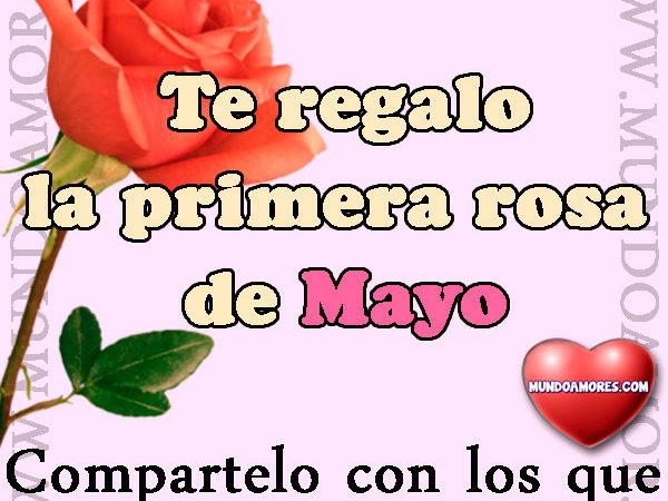 Primera rosa de Mayo