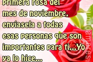 Te envió la primera rosa del mes de noviembre