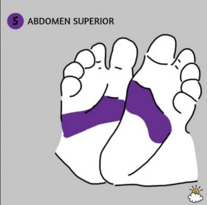 abdomensuperior