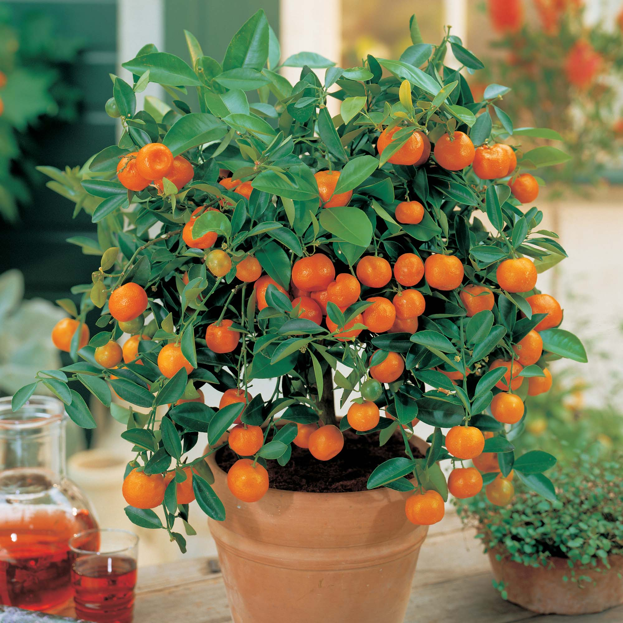 fruta7
