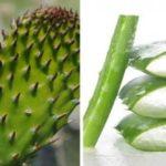 Los mejores remedios caseros para controlar la diabetes