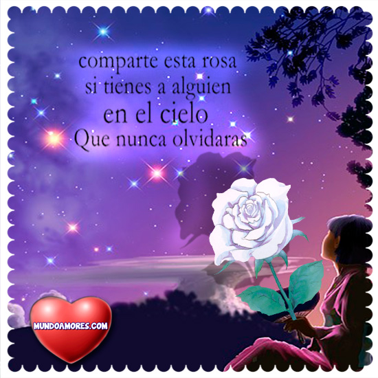 Comparte esta rosa