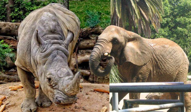 El zoológico de Barcelona decidió cerrar sus puertas para convertirse un parque 'animalista'